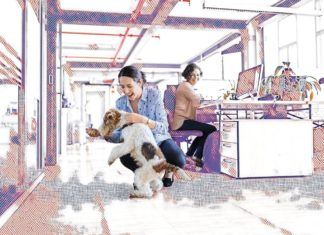 Woman in office environment playing with a dog